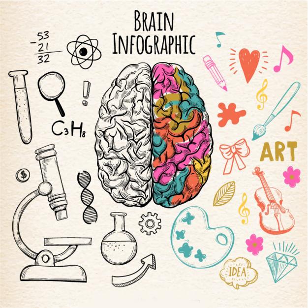 Mỗi bán cầu não đảm trách những nhiệm vụ cụ thể, riêng biệt và khi được phát triển sẽ đem lại những bộ kỹ năng hoàn toàn khác nhau